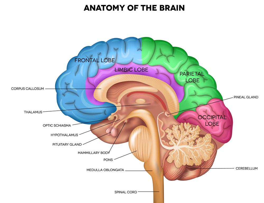 nervous system, neurology